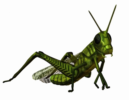 hopper: 3D rendering of a green grasshopper