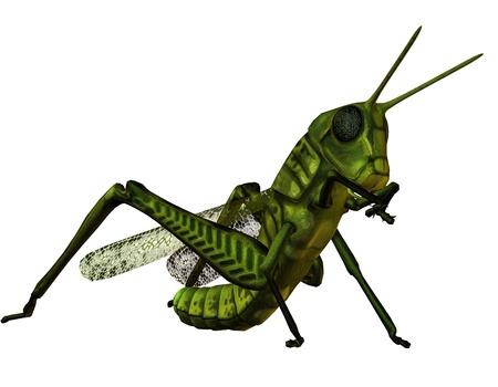 plague: 3D rendering of a grasshopper when eating
