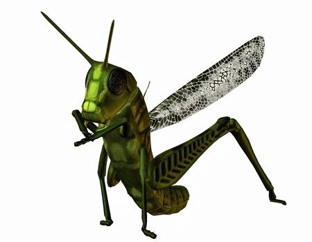 3D rendering of a standing grasshopper