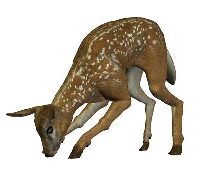intake: 3D rendering of a deer in food intake