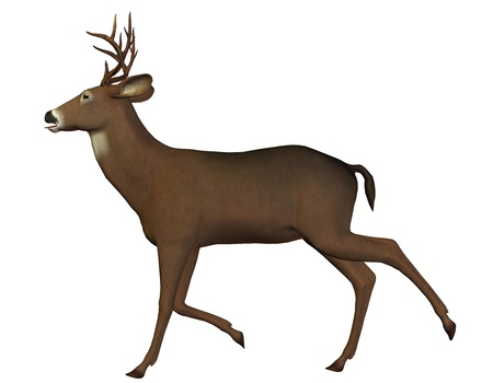 cervidae: 3D rendering of a running deer