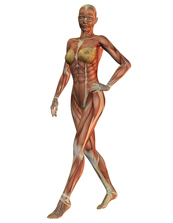 flesh surgery: 3D rendering of the anatomy of the muscles and the woman running