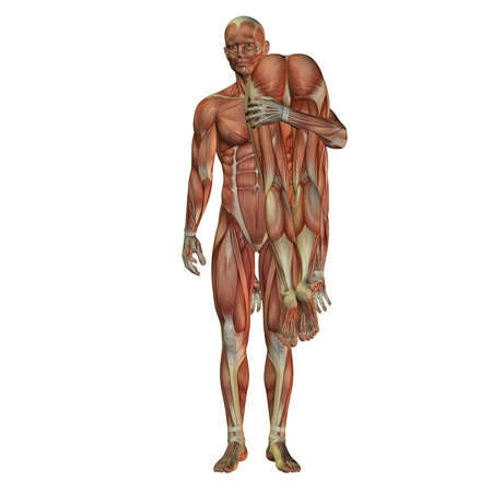 anatomy muscle: 3D rendering of a representation of the human muscles Stock Photo