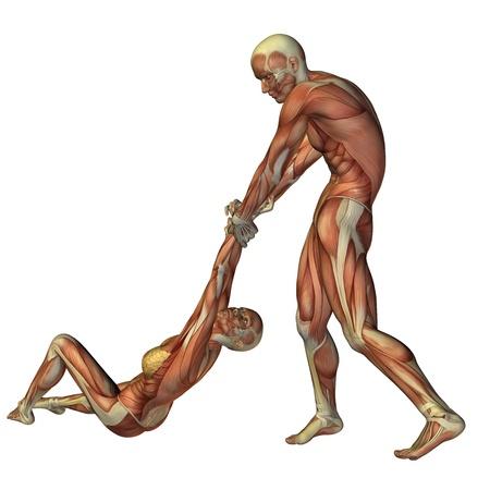 muskelaufbau: 3D-Rendering der Anatomie des Muskelaufbau und Erste Hilfe