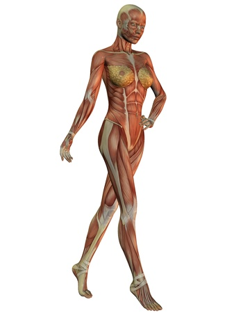 musculature: 3D rendering of anatomy and musculature of women in running Stock Photo