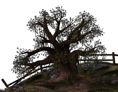 gnarled: 3d rendering of an old tree as an illustration Stock Photo