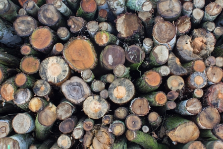 Stacked logs from forestry Stock Photo