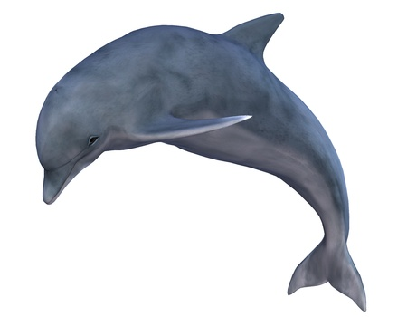 dolphin jumping: 3D rendering of a jumping dolphin Stock Photo