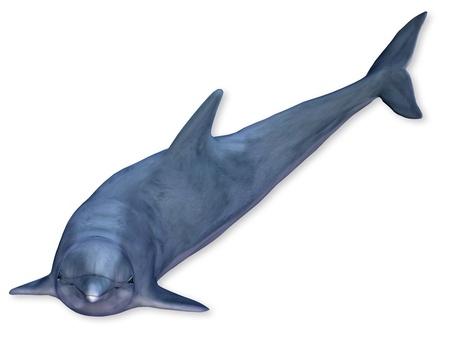 seres vivos: Representaci�n 3D de un delf�n flotante Foto de archivo