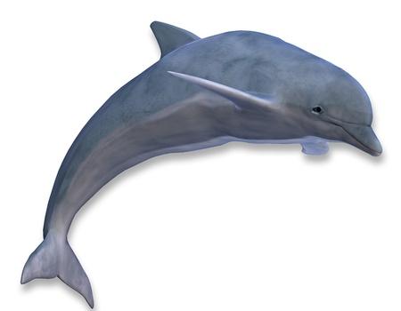seres vivos: Representaci?n 3D de un delf?n saltando