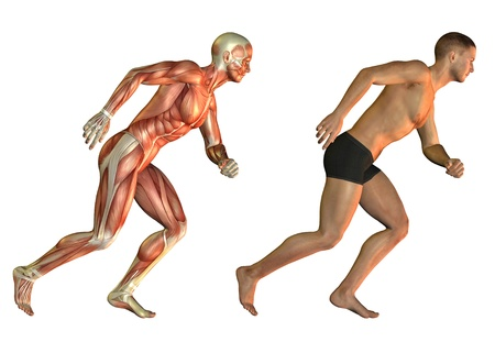 leg muscle: Anatomy and performance study of a man with muscle structure