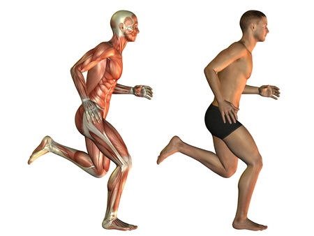 leg muscle fiber: Body study of a running man Stock Photo