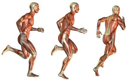 Illustration muscle in man Standard-Bild