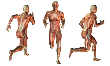 leg muscle fiber: Illustration of muscle man while running Stock Photo