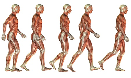 Illustration of a running man as a muscle study