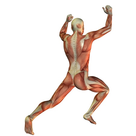 weightlifter: Illustration of muscle structure in a male weightlifter from behind Stock Photo