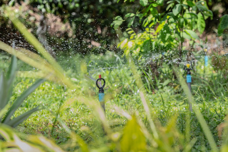 water sprinkler n ground in the garden and small green tree background