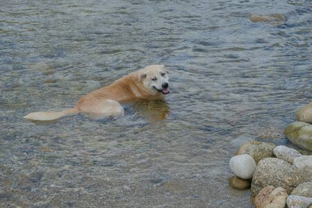 The dogs lie comfortably in the water. While looking at the camera Like sending a smile 写真素材