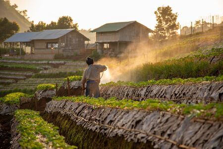 The owner of the strawberry plantation sprayed insecticide to take care of the produce in the morning.The owner of the fruit farm takes care of the produce.