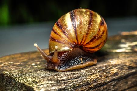 Slugs brown creeping Stock Photo