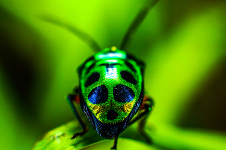Beetle with a charming green color Stock fotó