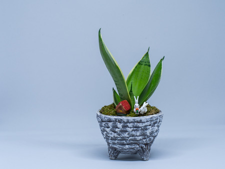 An adorable decorating plant with the little rabbits and house, moss, Snake Plant or Mother In Law Tongue in the pot. Stock Photo