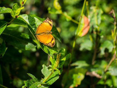 Plain moment of nature with brown butterfly.