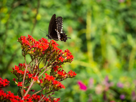 The big black butterfly on the red flower feels  a bit contrast.