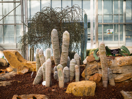 Very long cactus grew up over the ground in the group Фото со стока