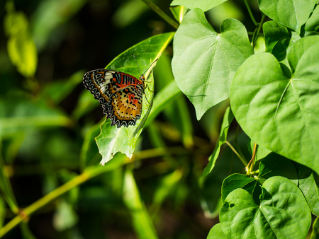zoom: Very nice striped colorful butterfly showing her beautiful wing.
