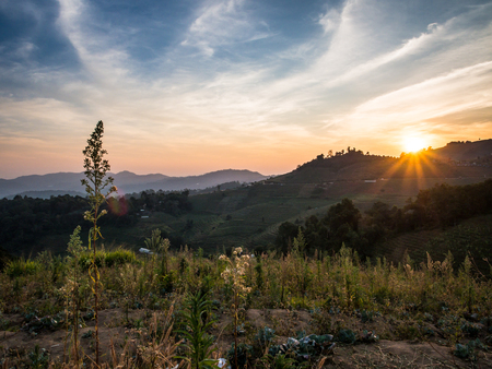Last moment of the sun leaving the tea plantation at Mon Jam, the northern part of Chiangmai, Thailand.