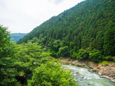 downstream: The pattern of the green conifer trees lining on the slope of the little hill with the downstream water in the lake beside. It is beauty of the nature to look at.