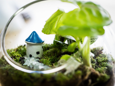 The little world of house, terrarium plant decoration.