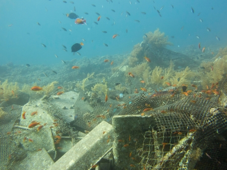 Dive Site University Eilat artificial reef to study coral photo