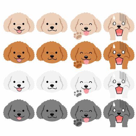 Toy Poodle Faces