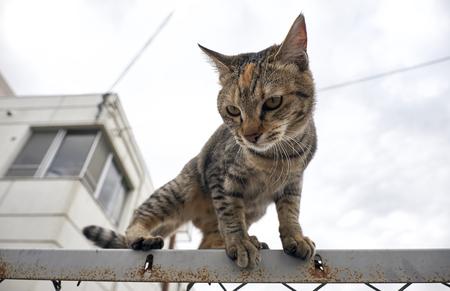 Outdoor Japanese cat Foto de archivo - 98865847