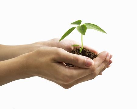 手、白い背景で隔離の植物