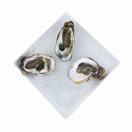 dozen: Oysters the Dozen  Stock Photo
