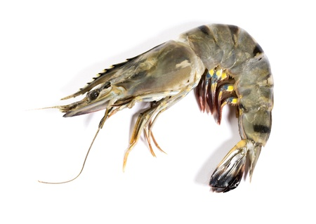 Raw black tiger shrimp on white background 写真素材