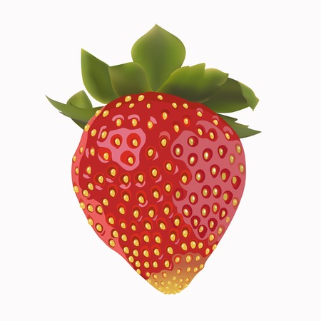 beautiful strawberries  vector illustration of a realistic Vector