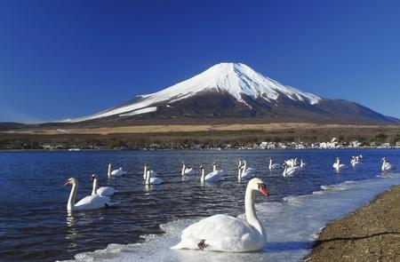 Mt.Fuji und der Schwan
