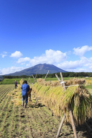 equinox: Traditional Japanese Rice and Mt.Iwate Editorial