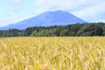 Traditional Japanese Rice and Mt.Iwate Stock Photo - 11391430