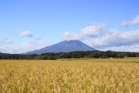 Traditional Japanese Rice and Mt.Iwate photo