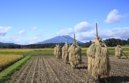 equinox: Traditional Japanese Rice and Mt.Iwate Stock Photo