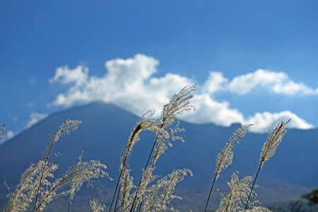pampas: japanese pampas  grass and Mt.Iwate Stock Photo