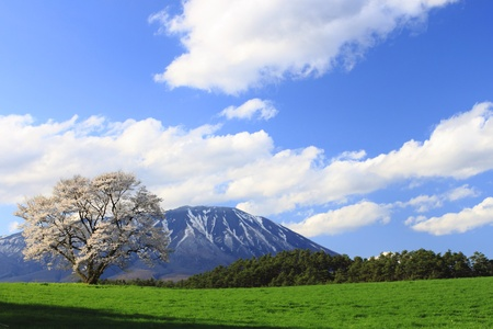 Mt.Iwate and cherry blossom photo