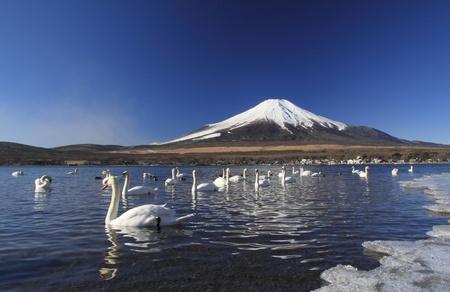 Mt Fuji and Lake Yamanaka  photo