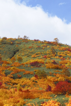 some  colorful  leaves in Hachimantai photo