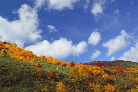 八幡平市でいくつかのカラフルな葉
